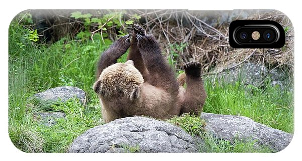 Grizzly Bear Phone Case by Dr P. Marazzi/science Photo Library