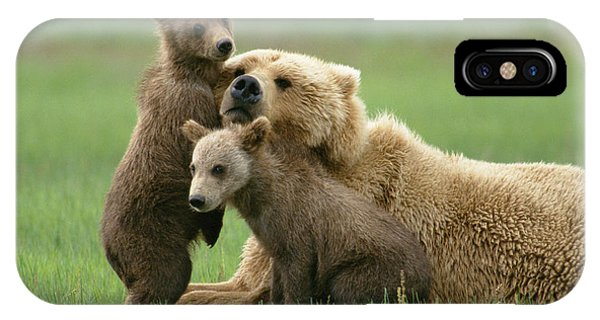 Grizzly Cubs Play With Mom IPhone Case