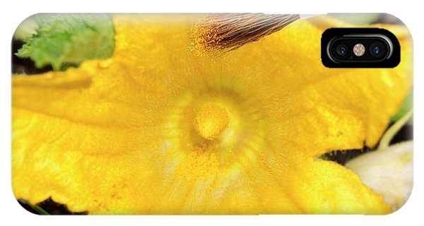 Pollination iPhone Case - Hand Pollination by Sheila Terry