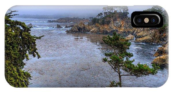 Harbor Seal Cove IPhone Case