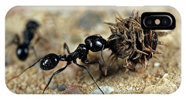 Harvester Ant IPhone Case