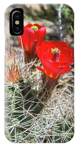 Adapted iPhone Case - Hedgehog Cactus (echinocereus Sp.) by Jim West