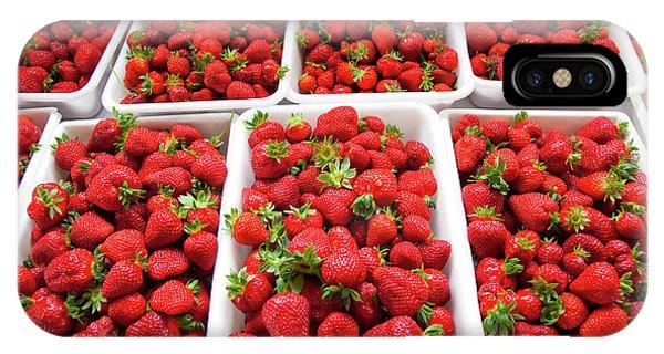 Hedgerow Hydroponics, Strawberry Farm by Douglas Peebles