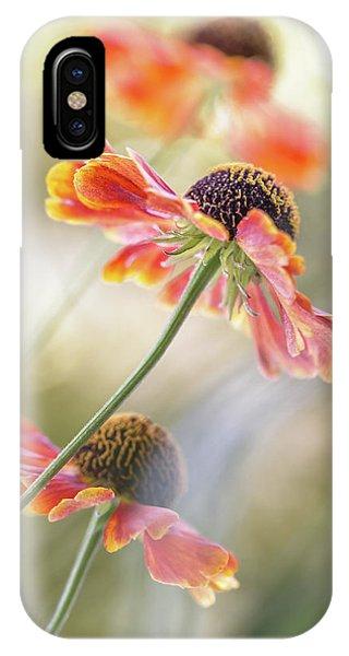 Flower Gardens iPhone Case - Helenium* by Mandy Disher