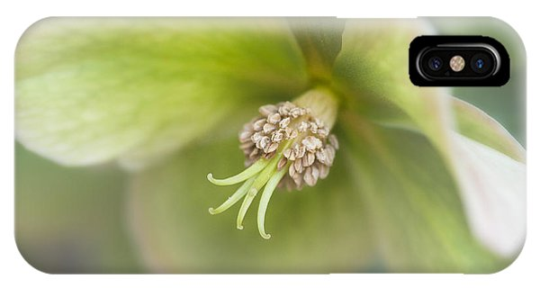 Helleborus Two IPhone Case