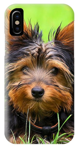 Small Dog iPhone Case - Hello Toby by Angela Doelling AD DESIGN Photo and PhotoArt