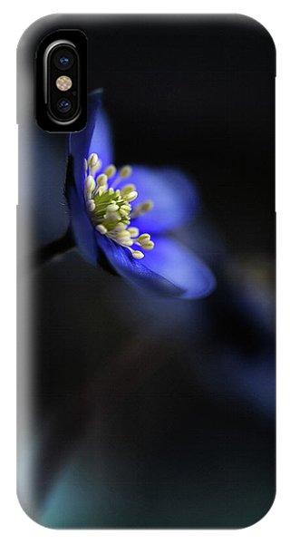 Dark Blue iPhone Case - Hepatica Nobilis Ll by Heidi Westum