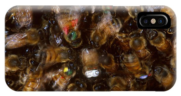 Pterygota iPhone Case - Honeybee Dance by James L. Amos