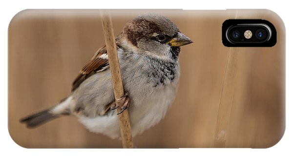 House Sparrow Passer Domesticus IPhone Case