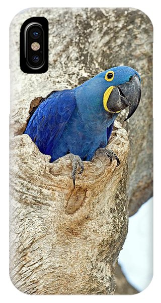 Macaw iPhone Case - Hyacinth Macaw by Tony Camacho/science Photo Library