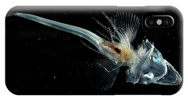 Adapted iPhone Case - Icefish by British Antarctic Survey/science Photo Library