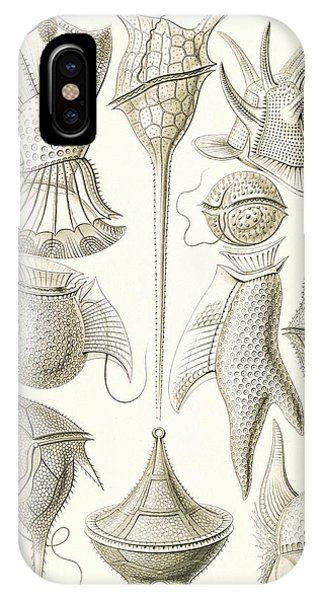 Illustration Shows Microorganisms. Peridinea Phone Case by Artokoloro