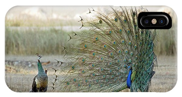 Peafowl iPhone Case - Indian Peacock by Tony Camacho/science Photo Library