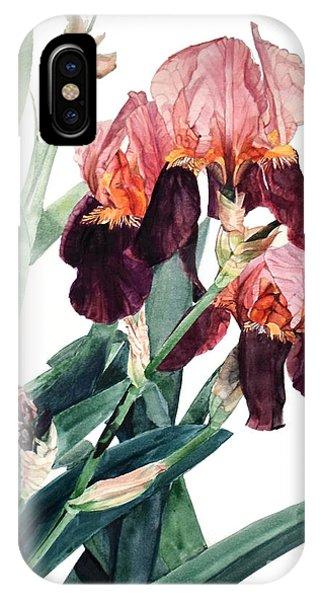 Watercolor Of A Pink And Maroon Tall Bearded Iris I Call Iris La Forza Del Destino IPhone Case
