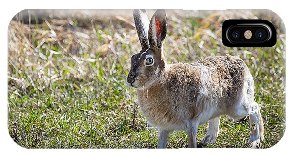 Jackrabbit IPhone Case