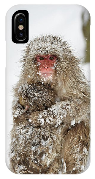 Adapted iPhone Case - Japanese Macaque With Young by Dr P. Marazzi