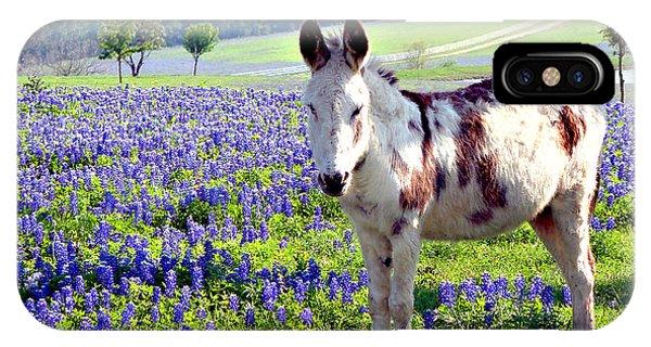 Jesus Donkey In Bluebonnets IPhone Case