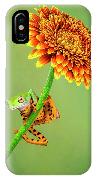 Just Hanging Around Phone Case by Renee Doyle