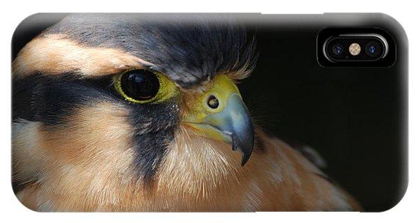 Kestrel Falcon IPhone Case