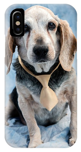 Famous Artist iPhone Case - Kippy Beagle Senior by Iris Richardson