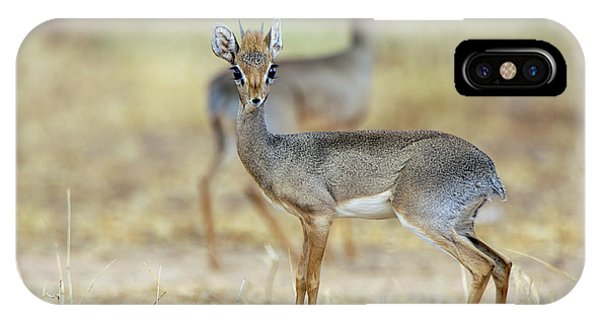 Kirk's Dik-dik Phone Case by Dr P. Marazzi/science Photo Library