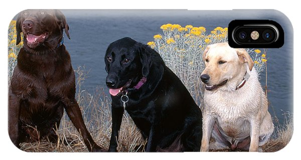 Yellow Lab iPhone Case - Labrador Retrievers by William H. Mullins