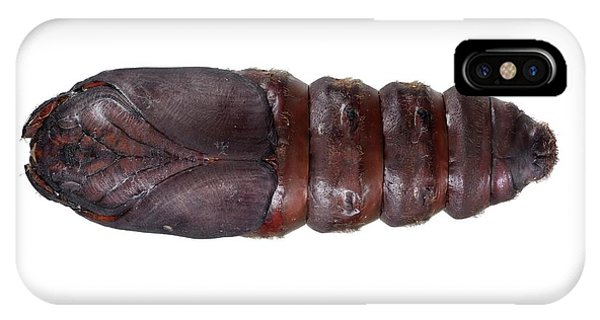 Chrysalis iPhone Case - Lappet Moth Pupa by F. Martinez Clavel