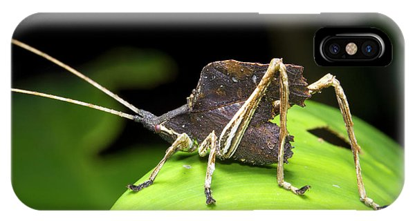 Leaf Mimic Bush-cricket IPhone Case