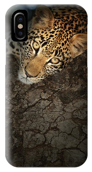 Close-up iPhone Case - Leopard Portrait by Johan Swanepoel