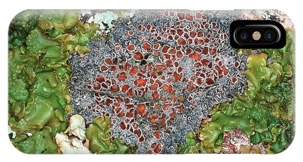 Lichens Phone Case by Dr Jeremy Burgess/science Photo Library