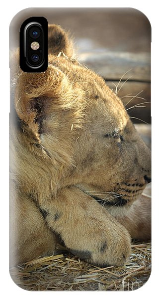 Lion Cub Dozing In The Sun IPhone Case