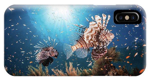 Danger iPhone Case - Lionfish by Barathieu Gabriel