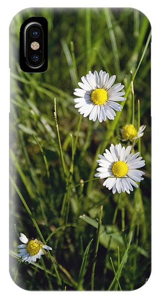 Little White Daisies IPhone Case