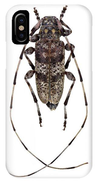 Coleoptera iPhone Case - Longhorn Beetle by F. Martinez Clavel