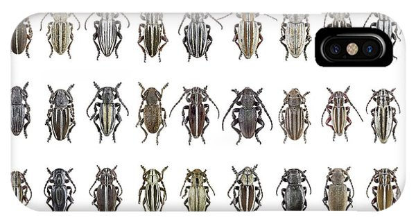 Coleoptera iPhone Case - Longhorn Beetles by F. Martinez Clavel