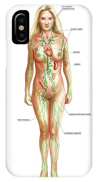 Lymphatic System Phone Case by Asklepios Medical Atlas