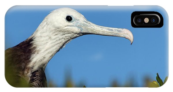 Magnificent Frigate Bird Phone Case by Christopher Swann/science Photo Library