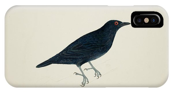 Starlings iPhone Case - Malay Glossy Starling by British Library