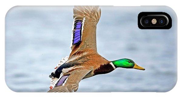 Anas Platyrhynchos iPhone Case - Male Mallard Landing On Water by Bildagentur-online/mcphoto-schulz
