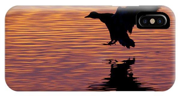 Anas Platyrhynchos iPhone Case - Mallard Drake Silhouette by Ken Archer