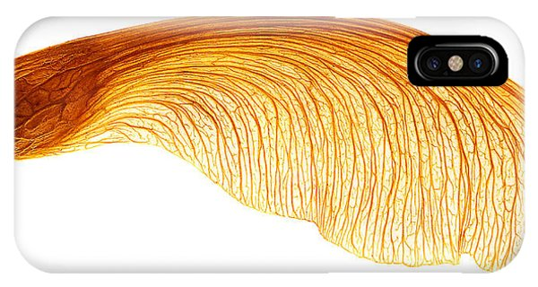 Maple Seed Pod IPhone Case