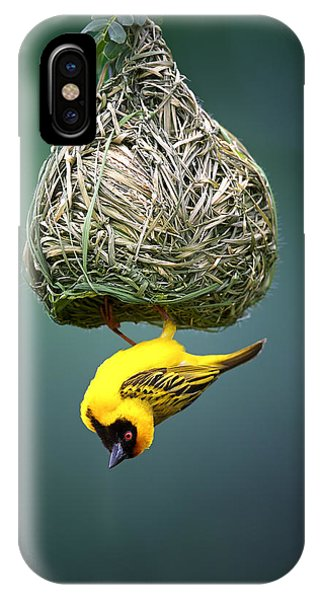 Clear iPhone Case - Masked Weaver At Nest by Johan Swanepoel