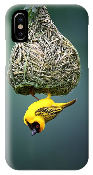 Fauna iPhone Case - Masked Weaver At Nest by Johan Swanepoel