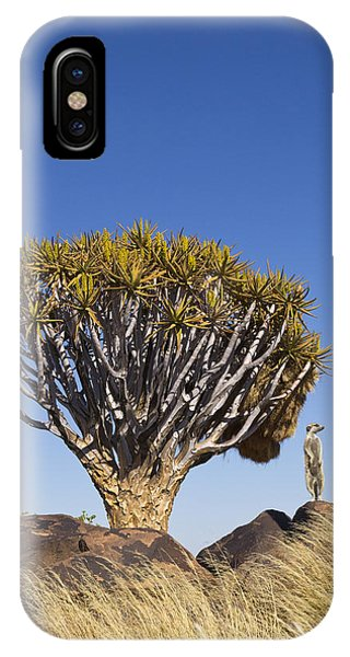 Meerkat iPhone Case - Meerkat In Quiver Tree Grassland by Vincent Grafhorst