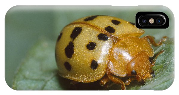 Mexican Bean Beetle iPhone Case - Mexican Bean Beetle by Harry Rogers