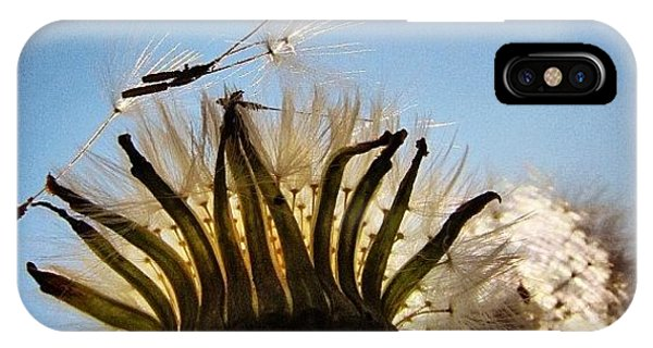 Sky iPhone Case - #mgmarts #dandelion by Marianna Mills