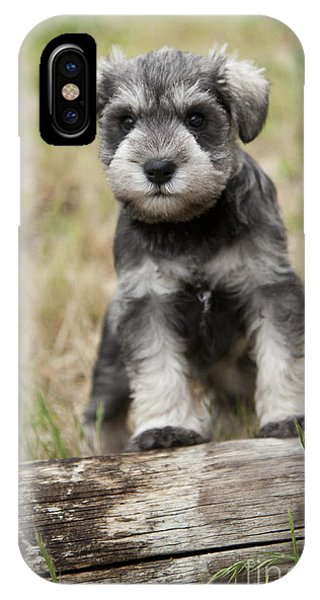Mini Schnauzer Puppy IPhone Case
