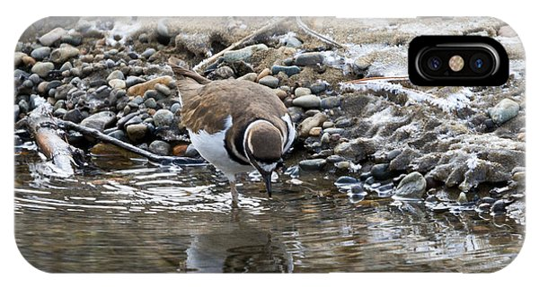 Killdeer iPhone Case - Mirror Mirror by Mike Dawson
