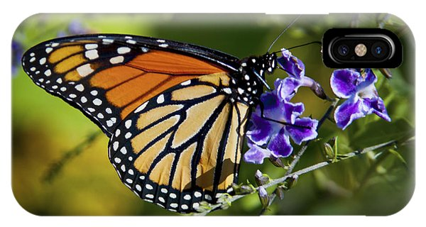 IPhone Case featuring the photograph Monarch Butterfly by David Millenheft