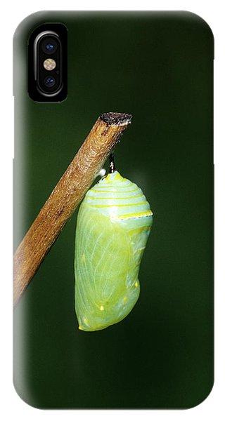 Chrysalis iPhone Case - Monarch (danaus Plexippus by Richard and Susan Day